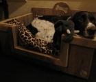 Hondenbak Lisa 4