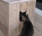 Kattenbak kast Marianne 2